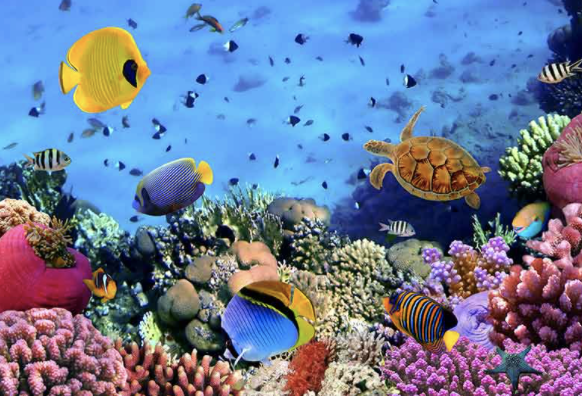 Who Lives On a Coral Reef Video Image