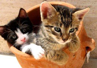 Kittens in a pot